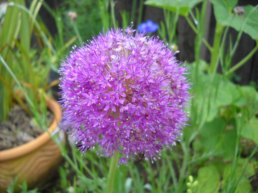 Daily Glimpses Of Japan Beautiful Japanese Flowers Noda