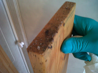 bed bug eggs are small and sticky.