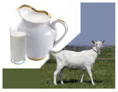 7 Kebaikan Susu Kambing untuk Tubuh