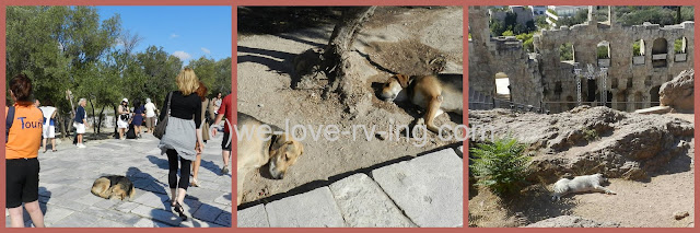 sleeping dogs on sidewalks and anywhere they lie down