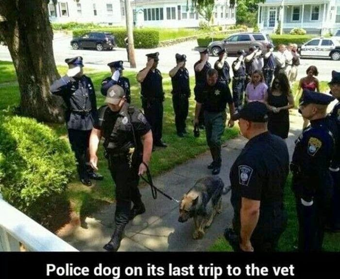 People doing amazing things for animals (28 pics), police officers gave salute to the dog who visits the vet for the last time
