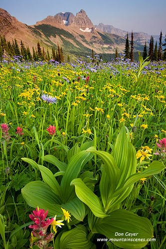 The Garden wall above flower meadows in Granite Park, Glacier National Park, Montana, USA.