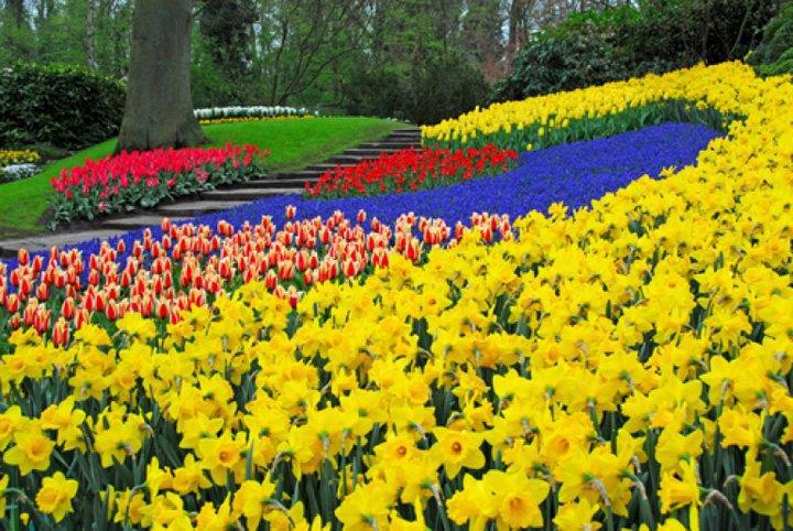 jardines con flores de colores