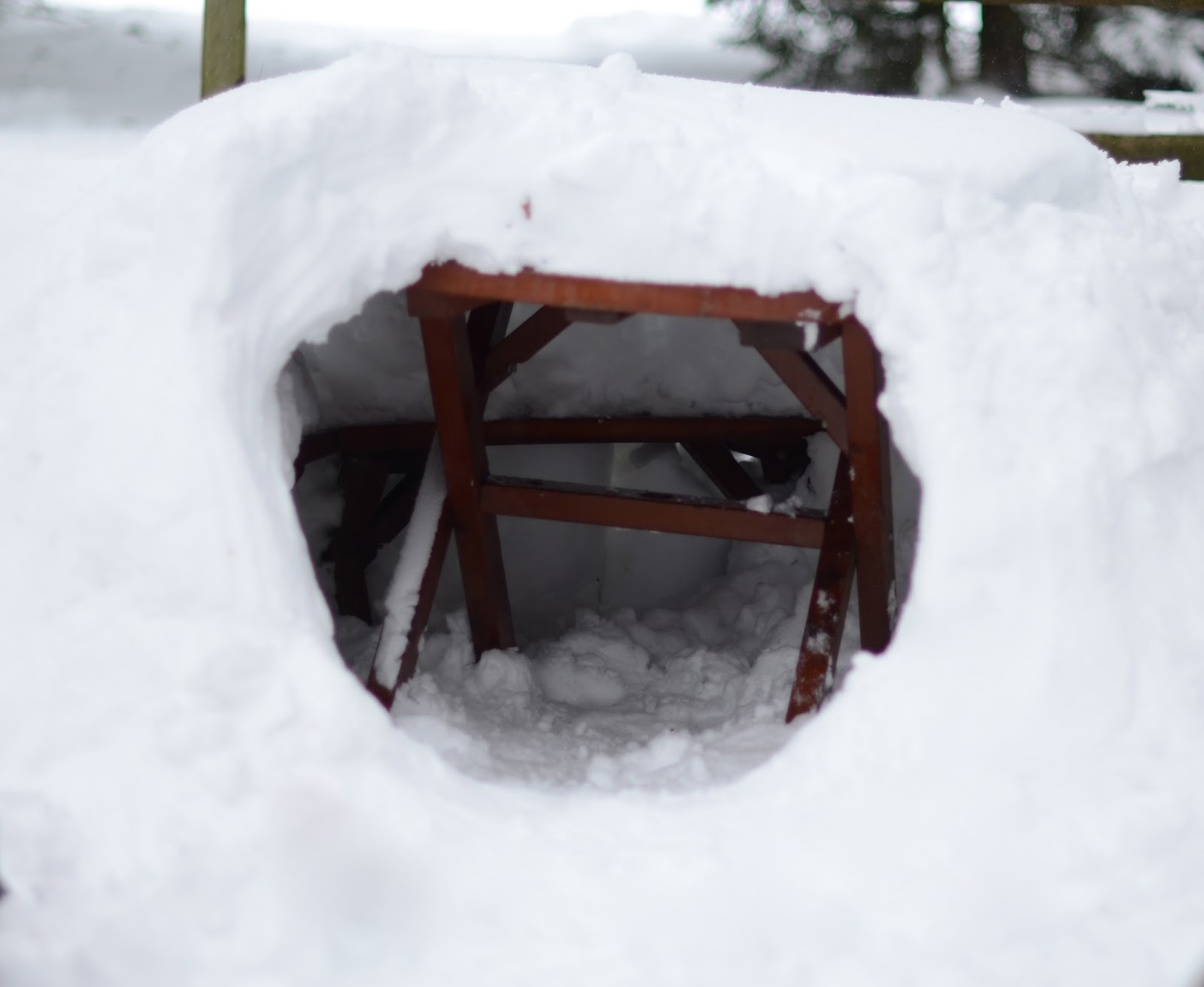 scaffold igloo
