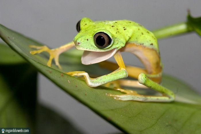 Le blog de la grenouille  blog ou je parle des tricots pour les prema de mes