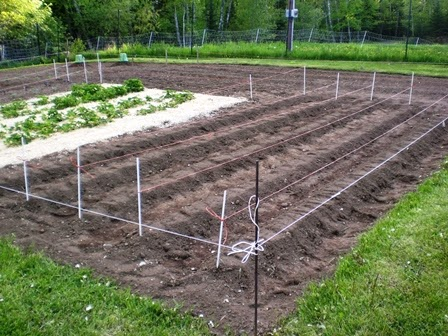 So I Laid Out My Rows And Using A Rake Made A Long Mound The Whole Length  Of Each Corn Row, Lightly Flattening And Packing Down The Top Of The Mound  With ...