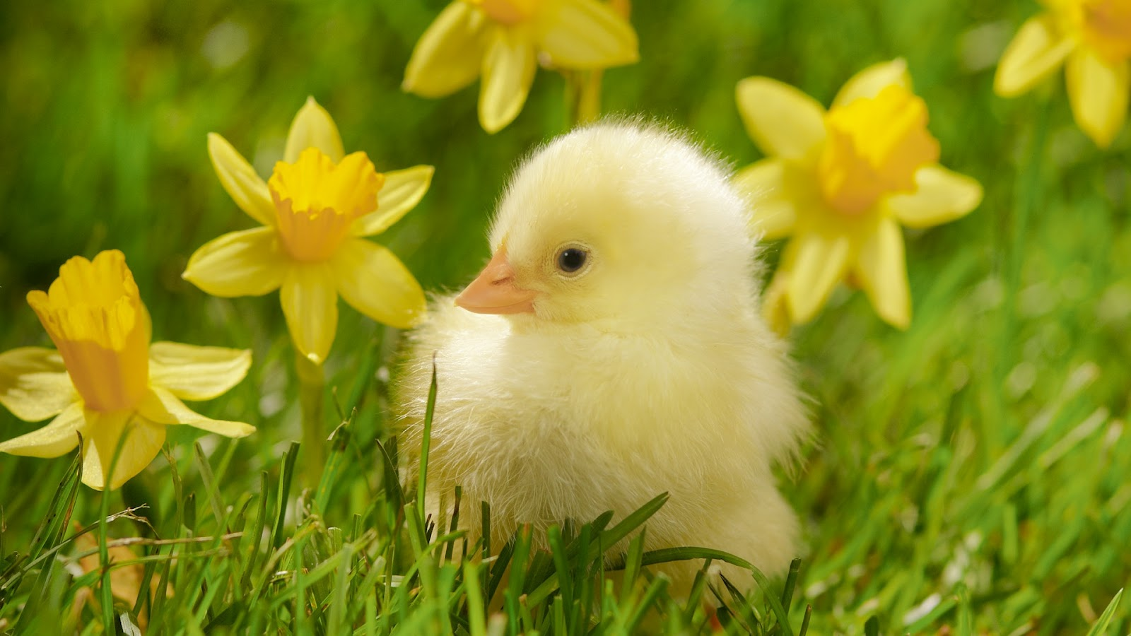 Top Spring Animals Wallpaper Wallpapers