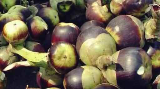 Gambar manfaat buah siwalan untuk kesehatan