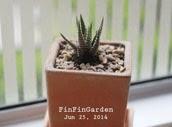 http://finfingarden.blogspot.com/2014/12/haworthia-attenuata-cactus-cacti.html