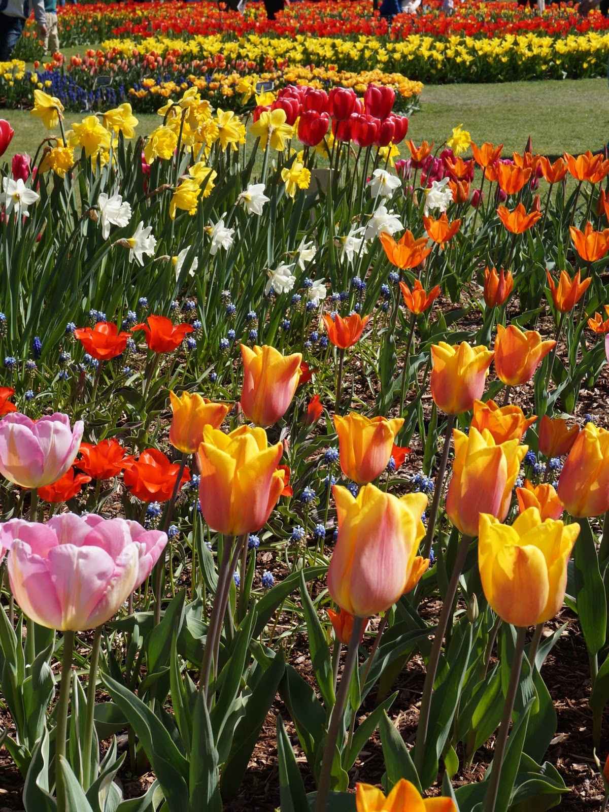 Moments of Delight...Anne Reeves: Seattle: Skagit Tulip Festival in ...
