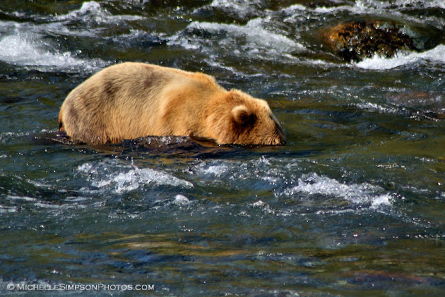 Fishing - Brooks Falls, Katmai, Alaska