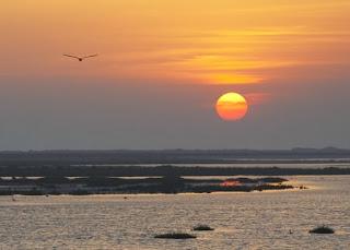 Paraje natural de las marismas del Odiel