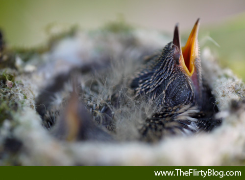 Baby Hummingbird, Beak Open