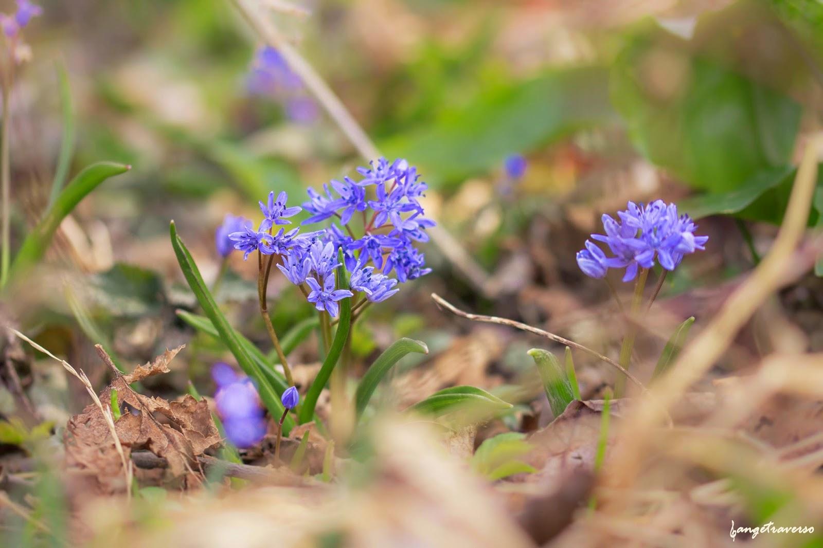Flore de Haute-Savoie, Rumilly, Rhone-Alpes