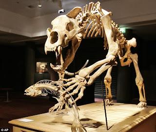 Animales de las Cavernas Ursus