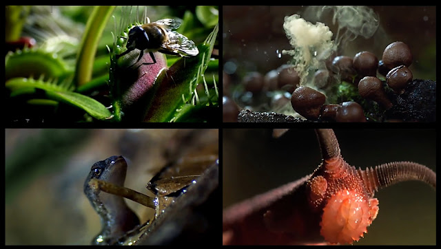 Screen Captures:  The Coolest Nature Video Ever