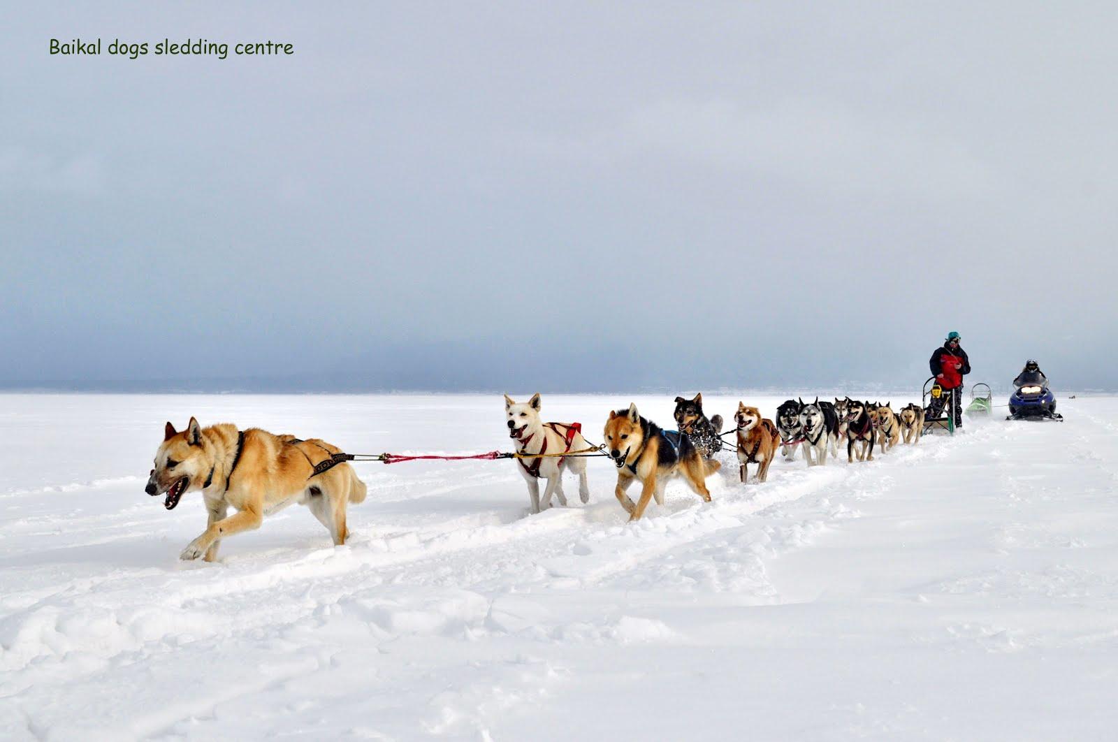 Николай перегоняет упряжку с другого берега Байкала