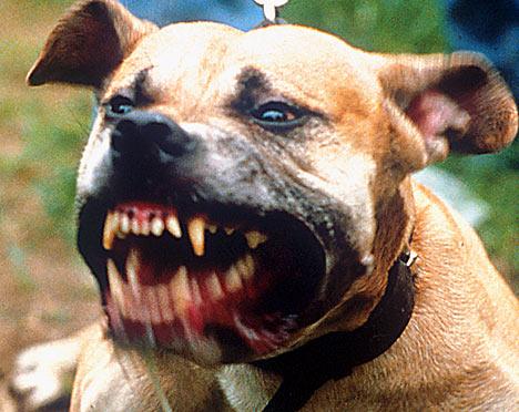 Perro ataca a bebe de 1 año