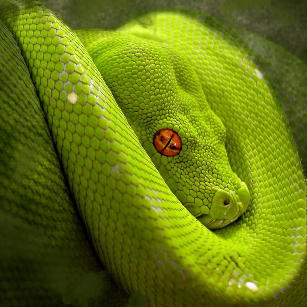 snake - photo #12