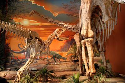 Esqueleto Saurophaganax