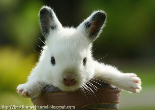 Little white banny