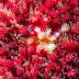Γεμίστε αισιοδοξία την ημέρα σας με ένα λιβάδι αστερίες του βυθού (pics)