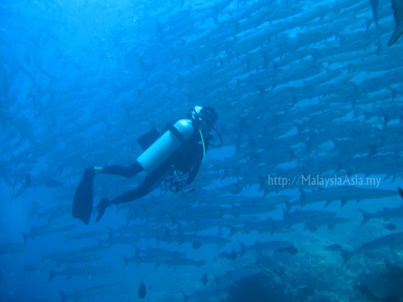 Pulau sipadan in world top 10 dive sites malaysia asia - Sipadan dive sites ...