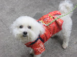 Chinese Princess Dog