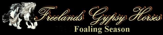 Foaling Cams