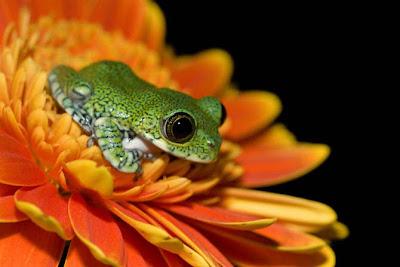 fotos, ranas, sapos, colores