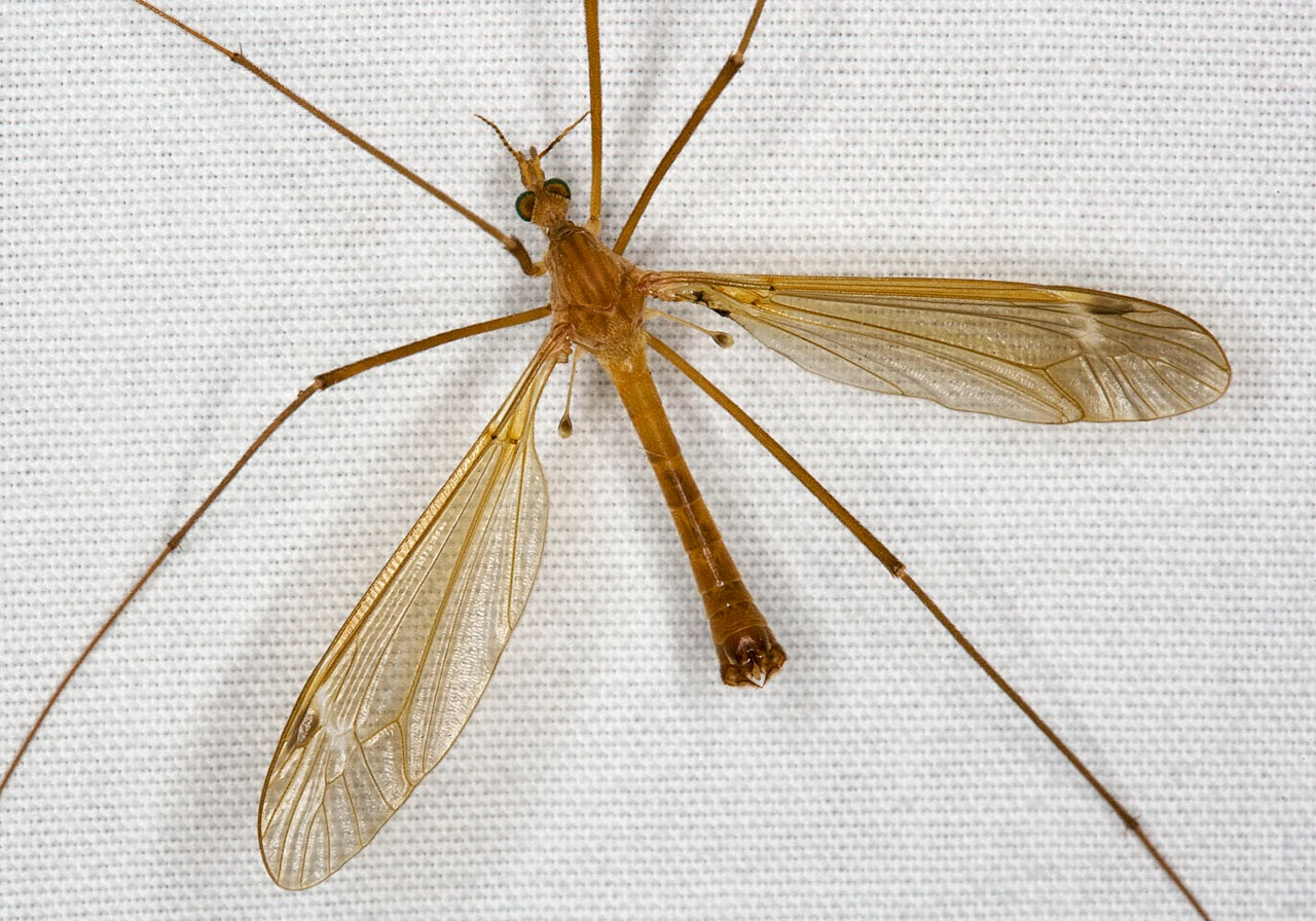 Filnore Woods Blog Daddy Long Legs