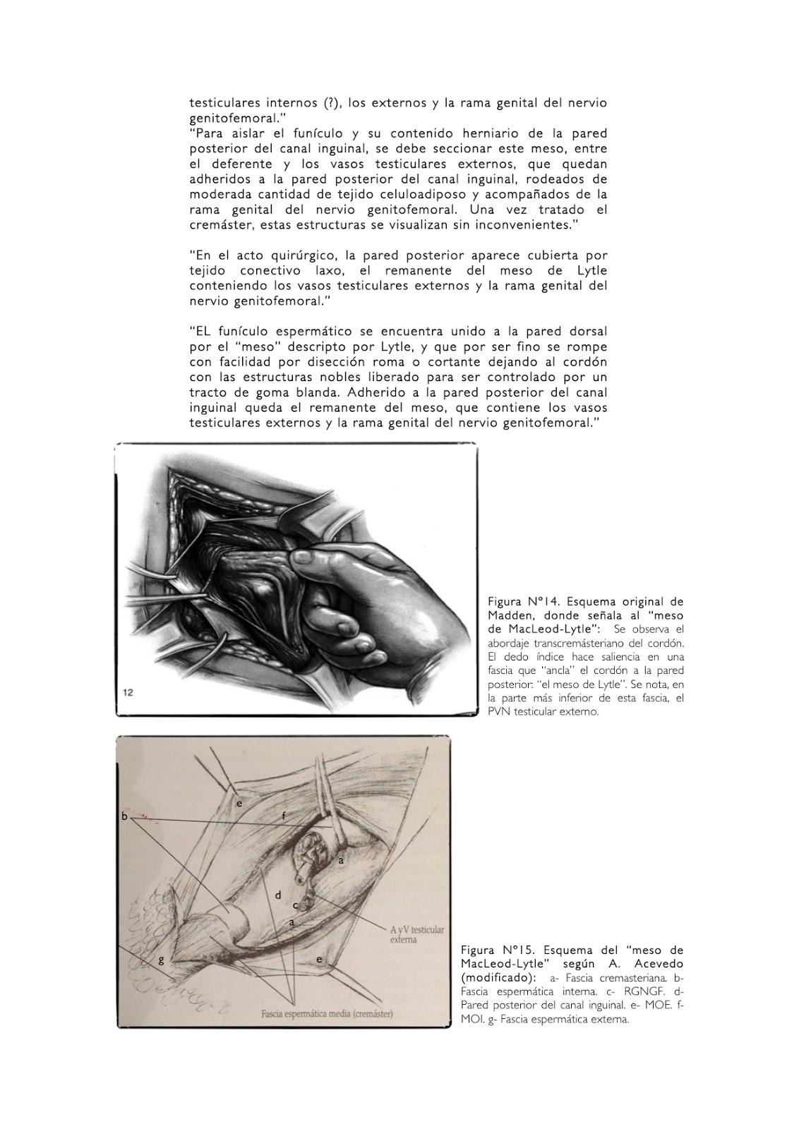 Cuadernos de Anatomía Quirúrgica: Anatomía quirúrgica del cremáster.