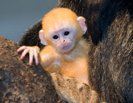 Images of wild baby animals - photo#14