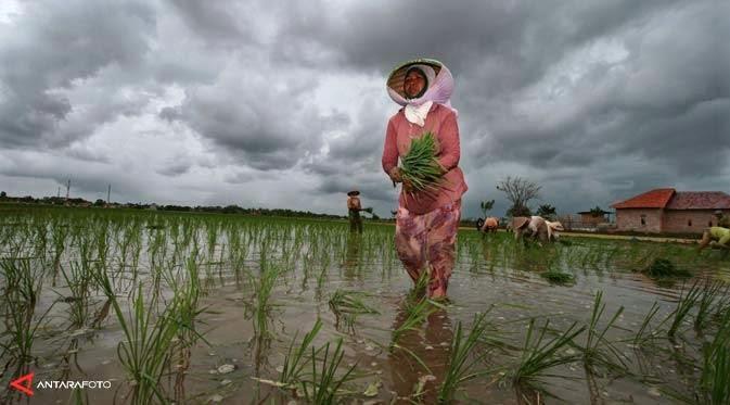 Pertanian Berantas Kemiskinan Indonesia