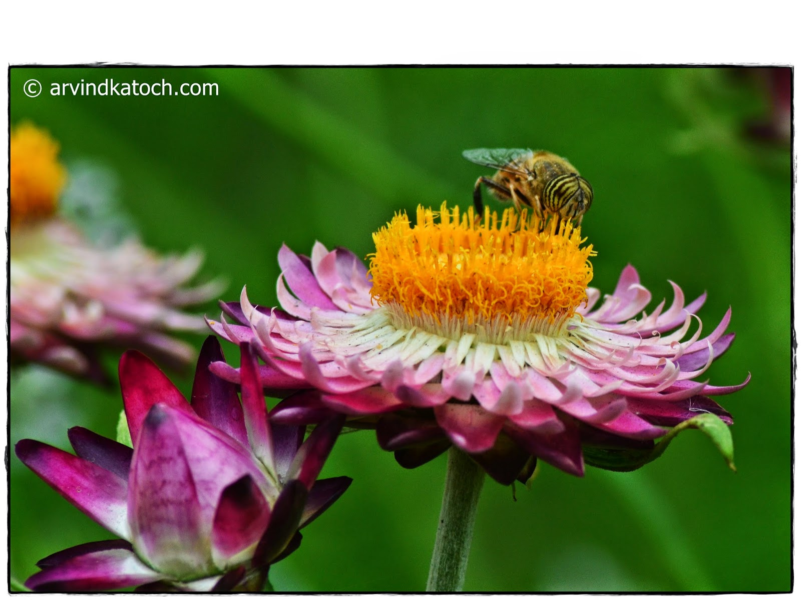 Bee, Nectar, Flower, Beautiful Flower