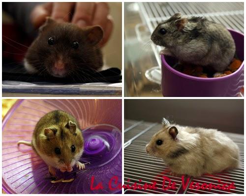 La Cuisine De Veronica, V女廚房, 倉鼠, Hamster