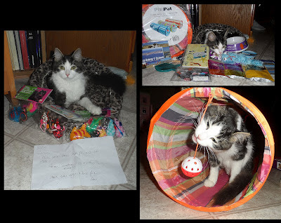 Anakin the two legged cat with presents