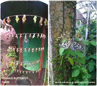 penang butterfly park with kids