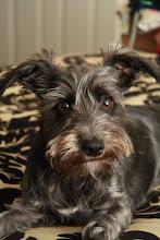 Our precious pup...