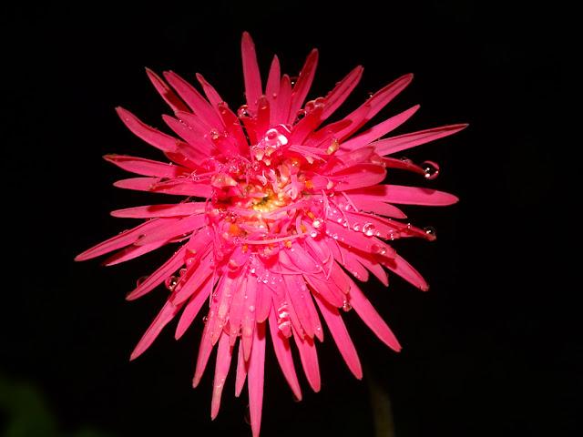 Walapaper Bunga Merah Merekah Indah