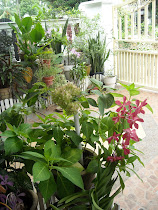 My mini garden