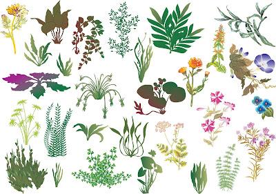 Siluetas de plantas a colores para diseñadores