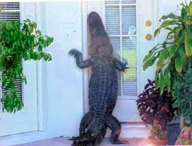Gator  Knocking