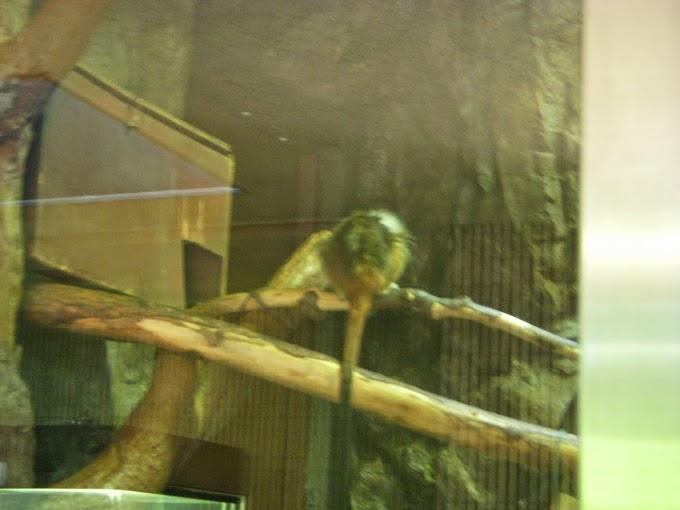 Ueno Zoo Part VI: Small Mammal House