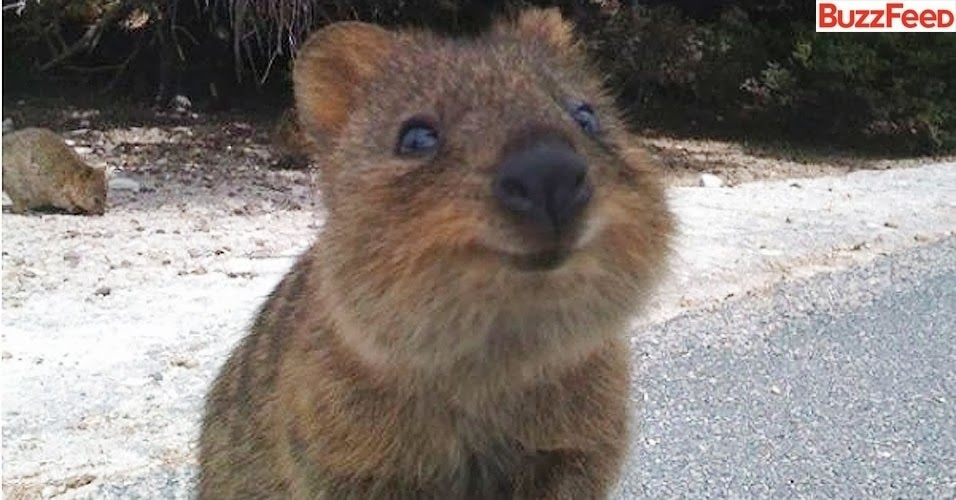 Keep calm and think of a Quokka :)