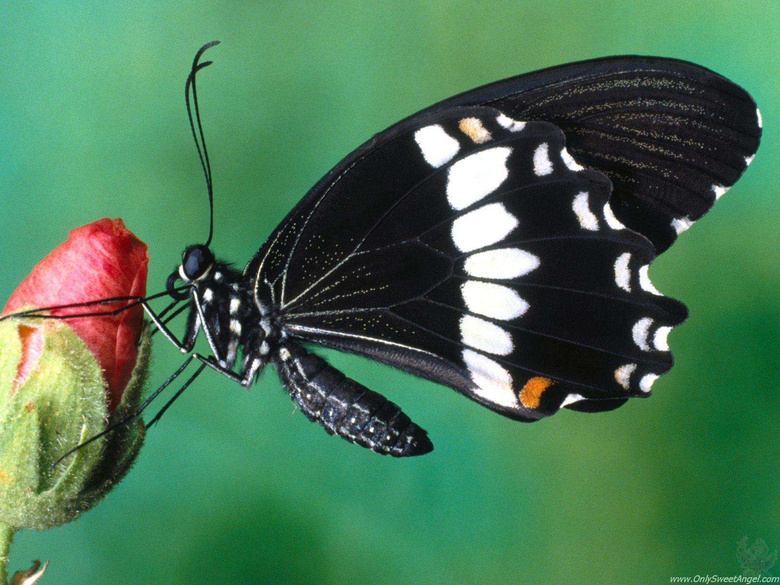http://2.bp.blogspot.com/-OLTMCJk4BDQ/TX-zLSXjSwI/AAAAAAAAC6k/-Y39UKTLSjQ/s1600/beautiful_butterflies_wallpaper_10.jpg