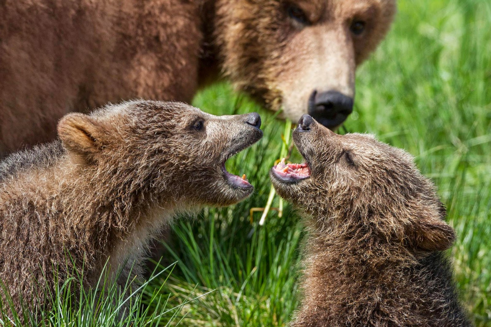 Wilmington on Movies: Bears