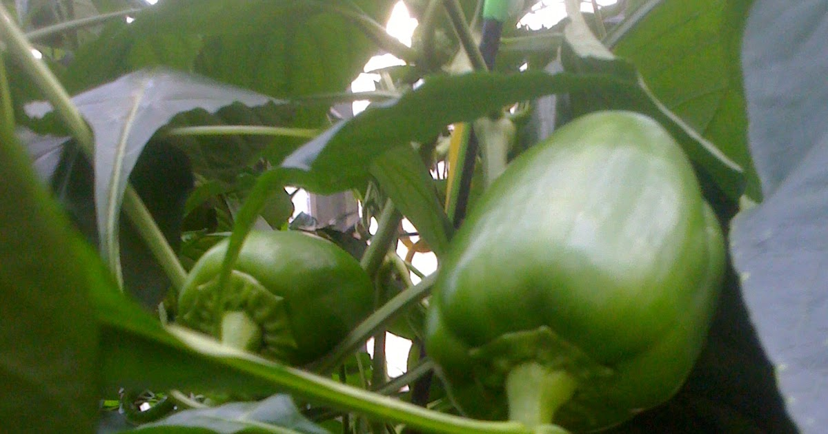 Hydroponics Blog Healthier Food The Conversion From