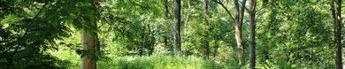 Skoven img