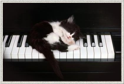 Very Special Quiz (la suite) Chat+et+piano+-+%C3%A9puis%C3%A9